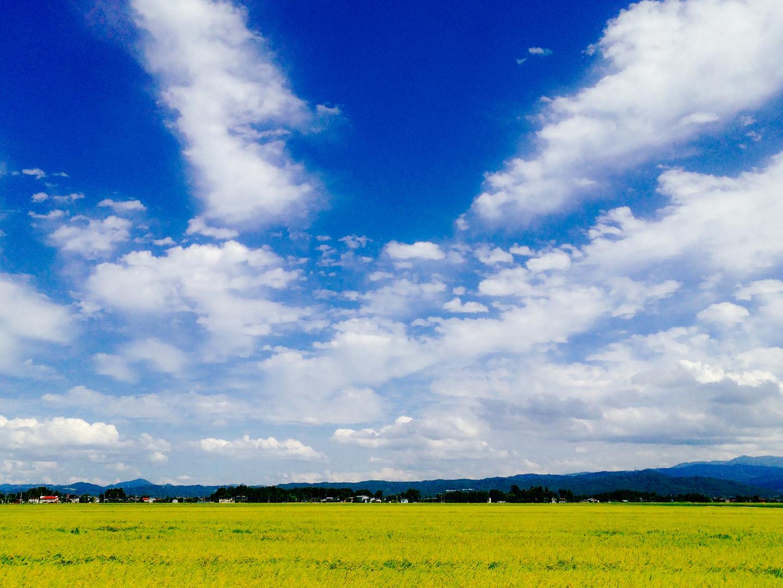新潟の景色 田
