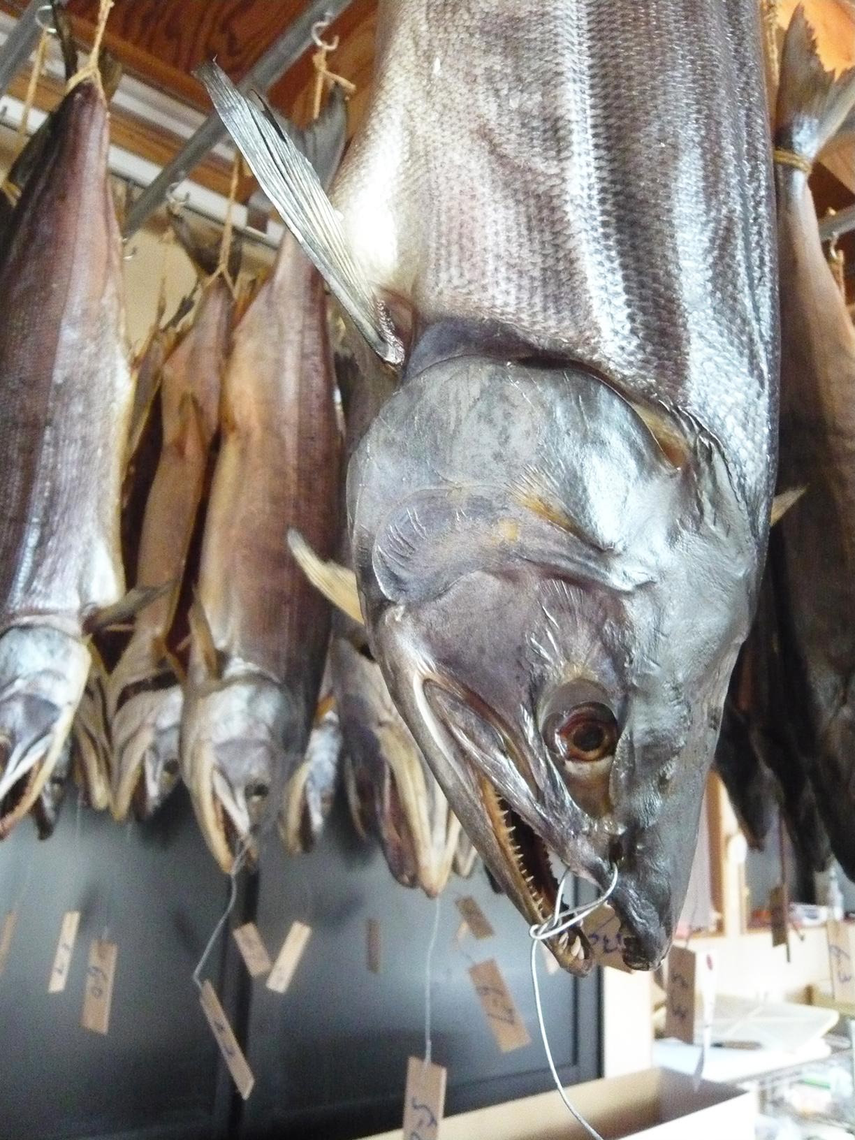 塩引き鮭アップ