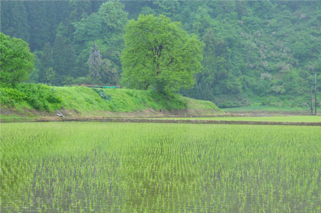 田のある風景