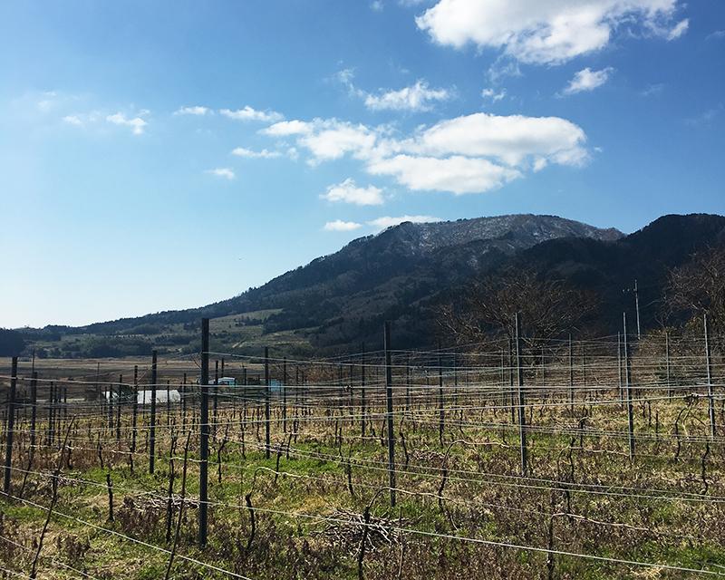 広がる葡萄畑と山