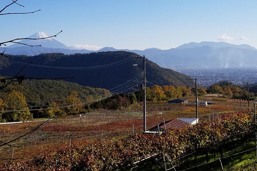 昇仙峡の近くの緑に囲まれたワイナリー