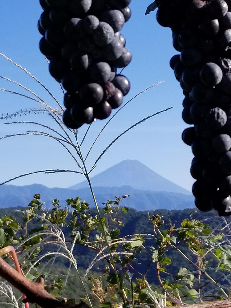 富士山と葡萄