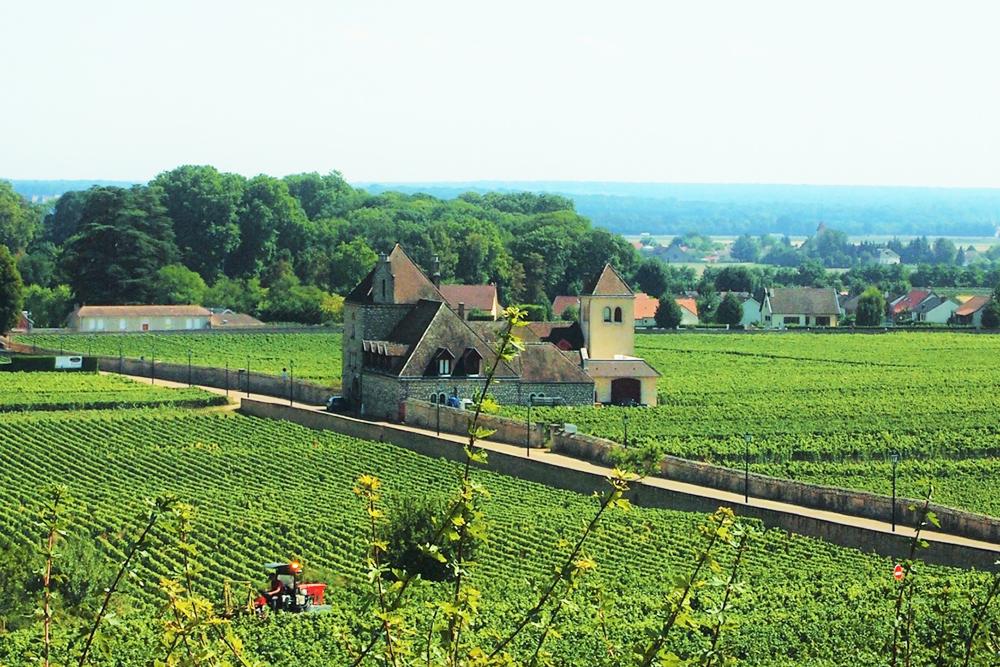 海外のワインセラー風景